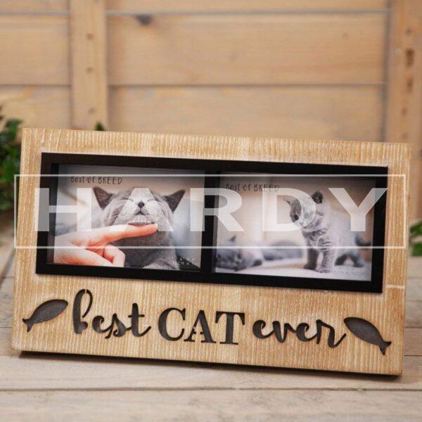 Fotokader kat, best cat ever, met lichtjes