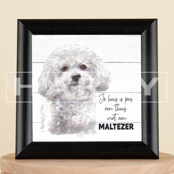 maltezer - kader - decoratie - hond